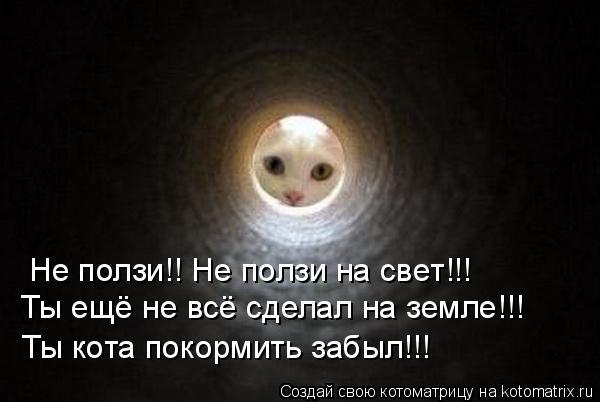 Котоматрица: Не ползи!! Не ползи на свет!!! Ты ещё не всё сделал на земле!!! Ты кота покормить забыл!!!