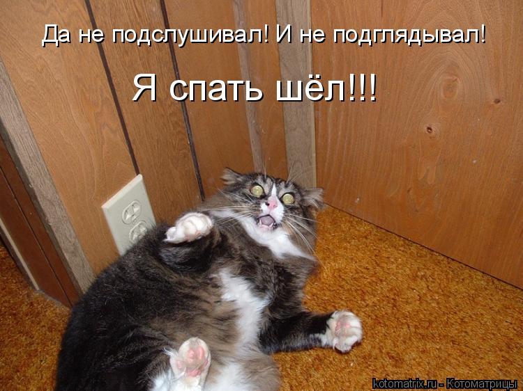 Котоматрица: Да не подслушивал! И не подглядывал!  Я спать шёл!!!