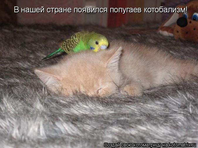Котоматрица: В нашей стране появился попугаев котобализм!