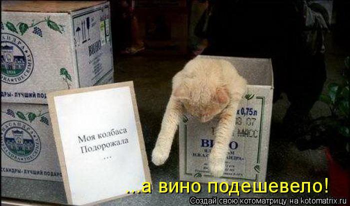 Котоматрица: ...а вино подешевело!