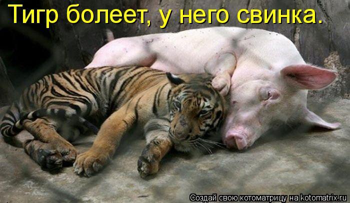 Котоматрица: Тигр болеет, у него свинка.