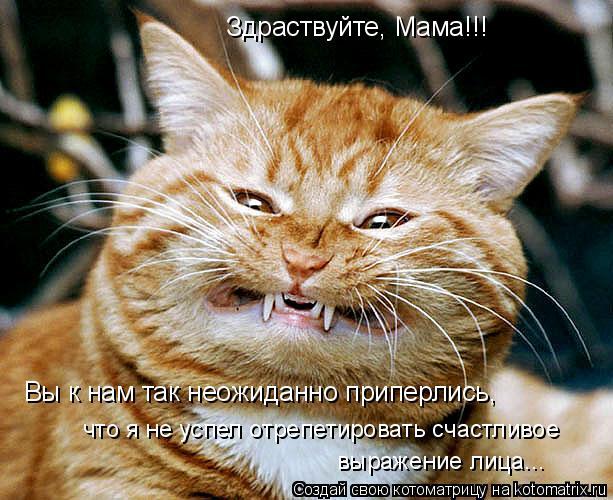 Котоматрица: Здраствуйте, Мама!!! что я не успел отрепетировать счастливое  выражение лица... Вы к нам так неожиданно приперлись,