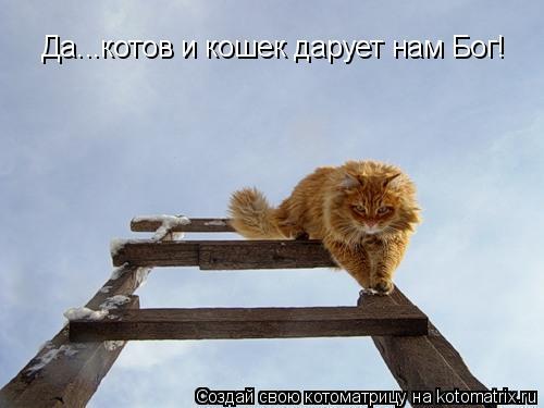 Котоматрица: Да...котов и кошек дарует нам Бог!