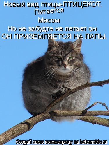 Котоматрица: Новый вид птицы-ПТИЦЕКОТ. Питается Мясом Но не забудте не летает он ОН ПРИЗЕМЛЯЕТСЯ НА ЛАПЫ.