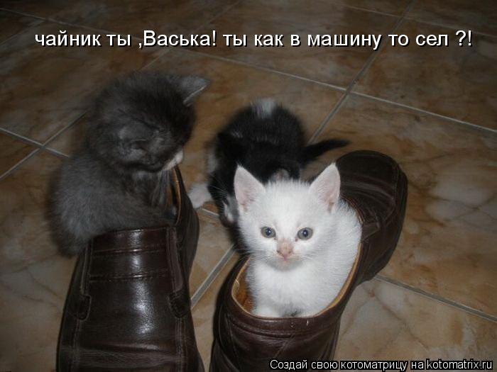 Котоматрица: чайник ты ,Васька! ты как в машину то сел ?!