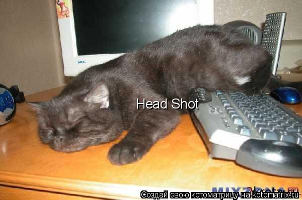 Котоматрица: Head Shot