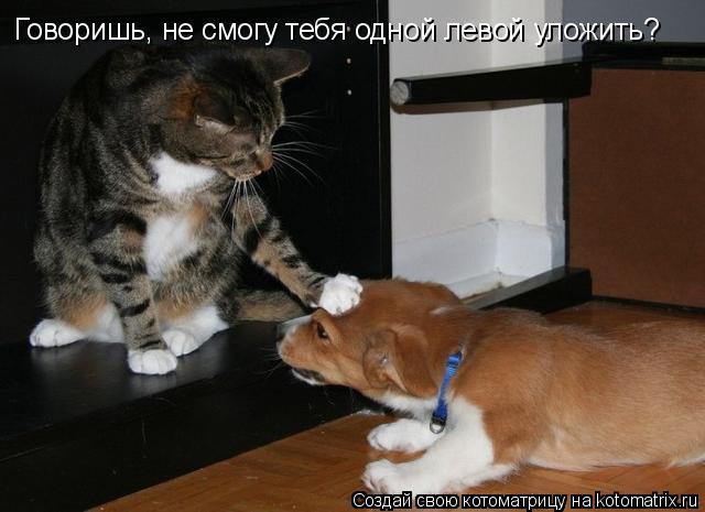 Котоматрица: Говоришь, не смогу тебя одной левой уложить?