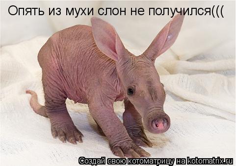 Котоматрица: Опять из мухи слон не получился(((