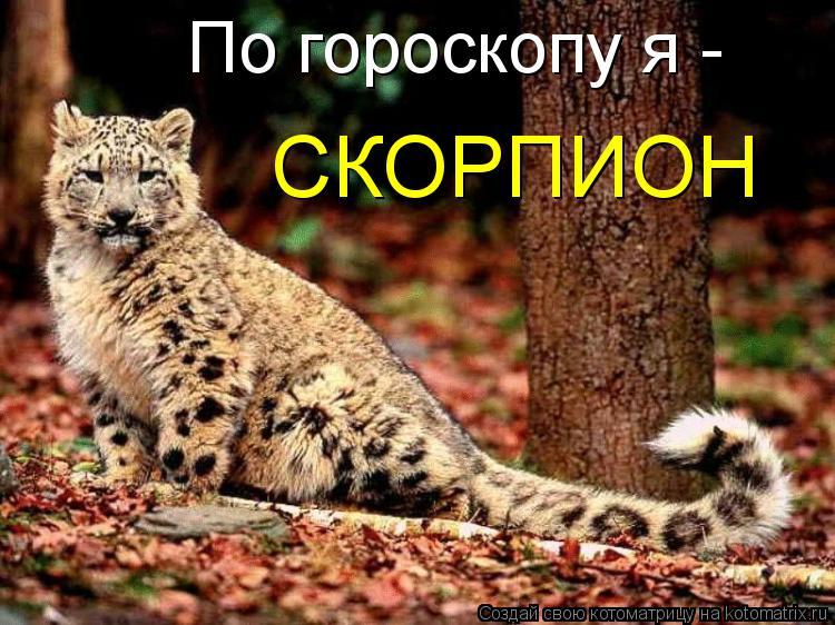 Котоматрица: По гороскопу я -  СКОРПИОН
