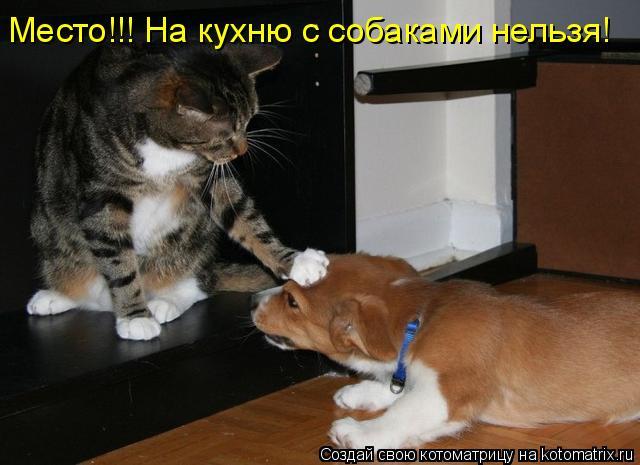 Котоматрица: Место!!! На кухню с собаками нельзя!