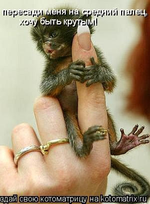 Котоматрица: пересади меня на средний палец,                              хочу быть крутым!