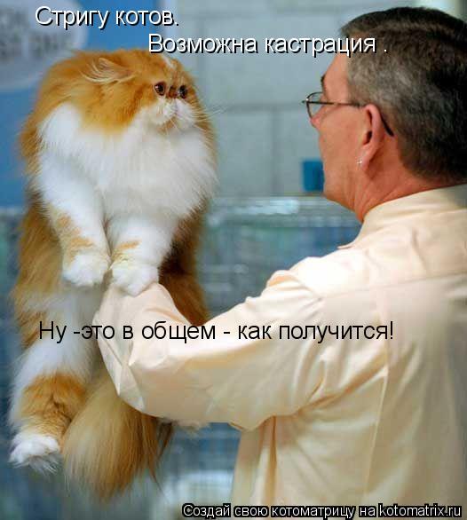 Котоматрица: Стригу котов. Возможна кастрация . Ну -это в общем - как получится!