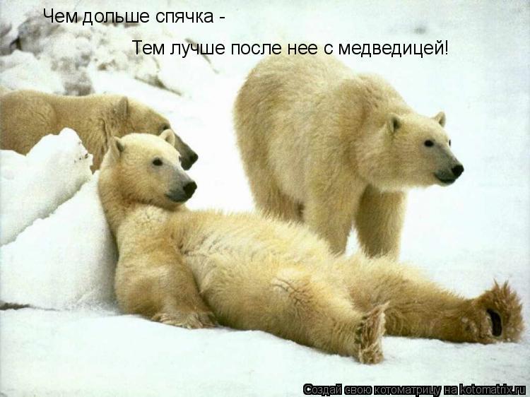 Котоматрица: Тем лучше после нее с медведицей! Чем дольше спячка -