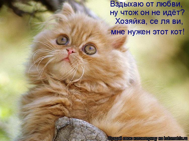 Котоматрица: Вздыхаю от любви, ну чтож он не идёт? Хозяйка, се ля ви, мне нужен этот кот!