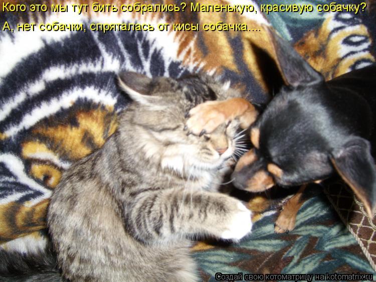 Котоматрица: Кого это мы тут бить собрались? Маленькую, красивую собачку?  А, нет собачки, спряталась от кисы собачка…...