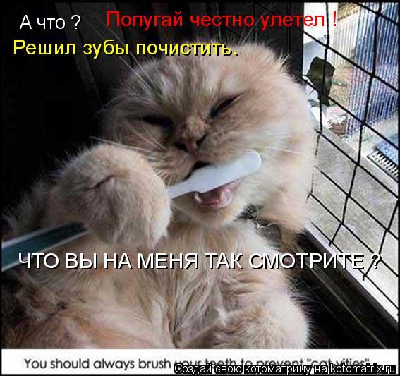 Котоматрица: А что ? Попугай честно улетел ! Решил зубы почистить. ЧТО ВЫ НА МЕНЯ ТАК СМОТРИТЕ ?