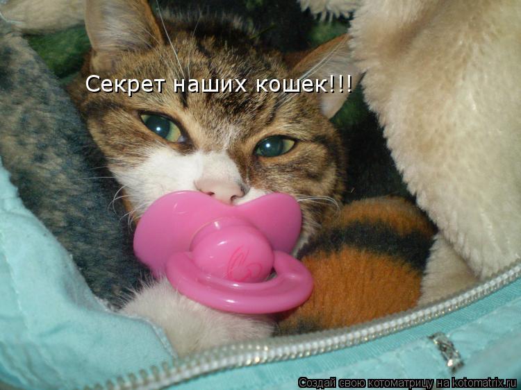 Котоматрица: Секрет наших кошек!!!