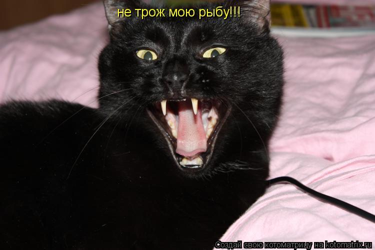 Котоматрица: не трож мою рыбу!!!