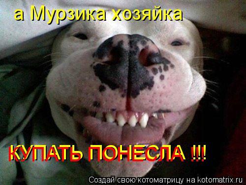 Котоматрица: а Мурзика хозяйка а Мурзика хозяйка КУПАТЬ ПОНЕСЛА !!! КУПАТЬ ПОНЕСЛА !!!