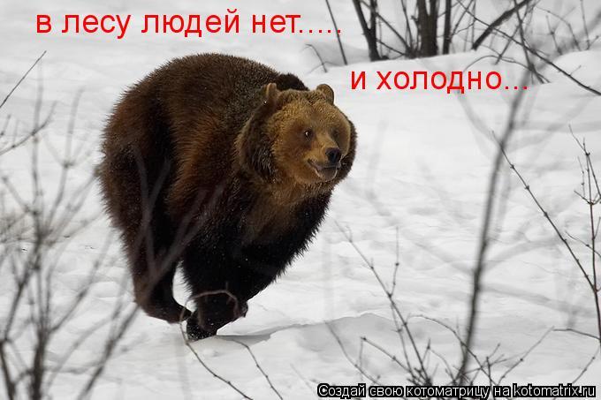 Котоматрица: в лесу людей нет..... и холодно...