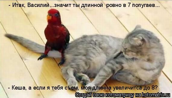 Котоматрица: - Итак, Василий...значит ты длинной  ровно в 7 попугаев... - Кеша, а если я тебя съем, моя длинна увеличитса до 8?