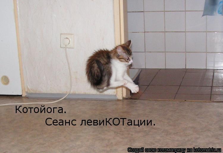 Котоматрица: Котойога. Сеанс левиКОТации.