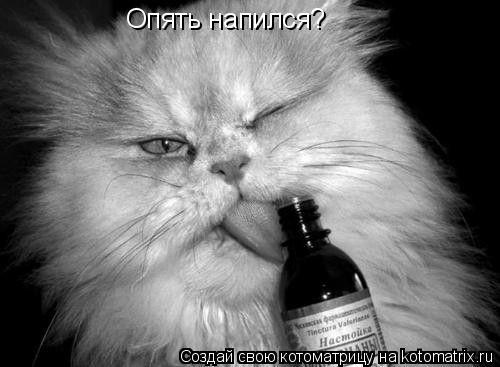 Котоматрица: Опять напился?