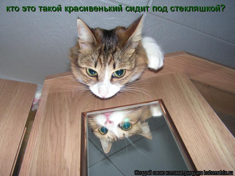 Котоматрица: кто это такой красивенький сидит под стекляшкой?
