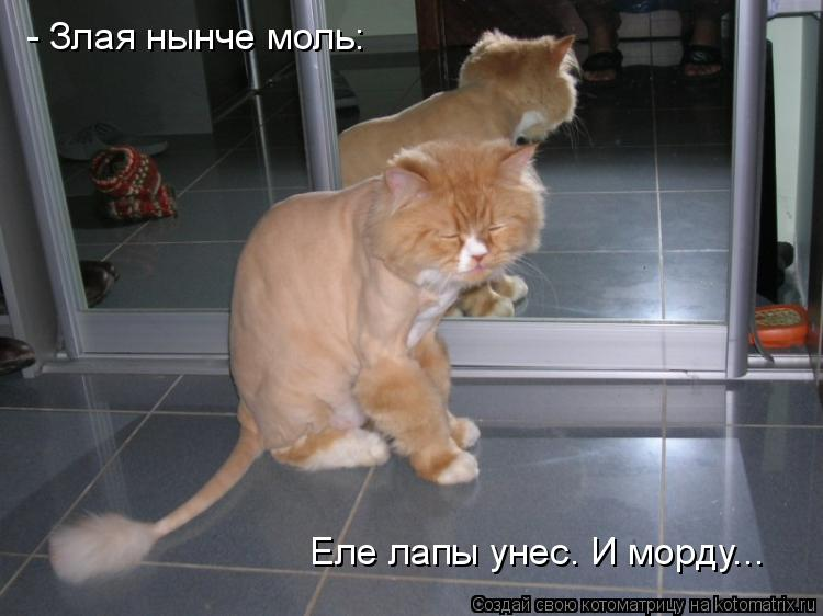 Описание: и стригущий лишай у кошек фото на сайте о природе и животных. покажите фото если есть как выглядит .