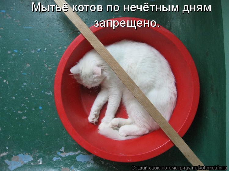 Котоматрица: Мытьё котов по нечётным дням запрещено.