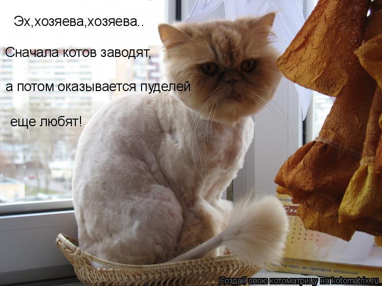 Котоматрица: Эх,хозяева,хозяева.. Сначала котов заводят, а потом оказывается пуделей  еще любят!