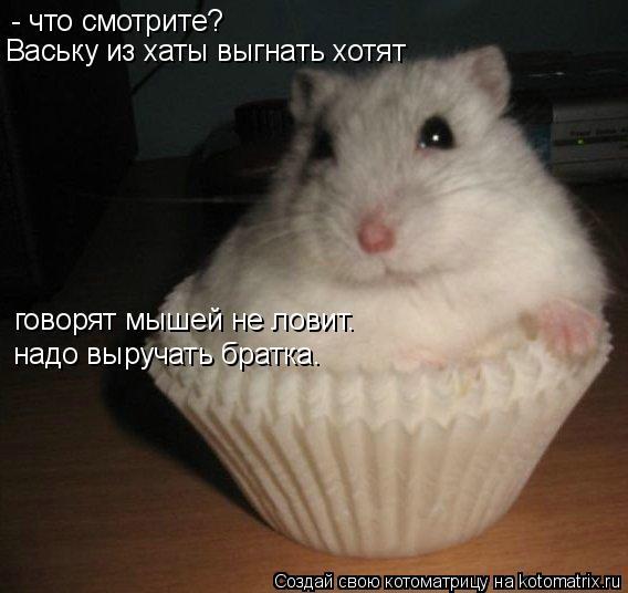 фраза мышей не ловит