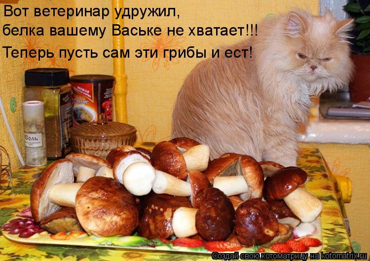 Котоматрица: Вот ветеринар удружил, белка вашему Ваське не хватает!!! Теперь пусть сам эти грибы и ест!