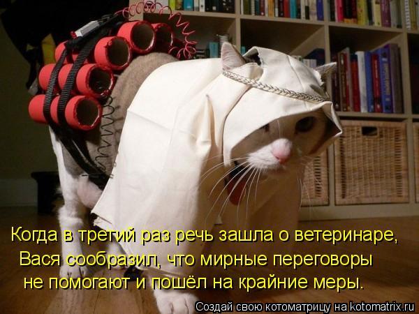 Котоматрица: Когда в третий раз речь зашла о ветеринаре, Вася сообразил, что мирные переговоры не помогают и пошёл на крайние меры.