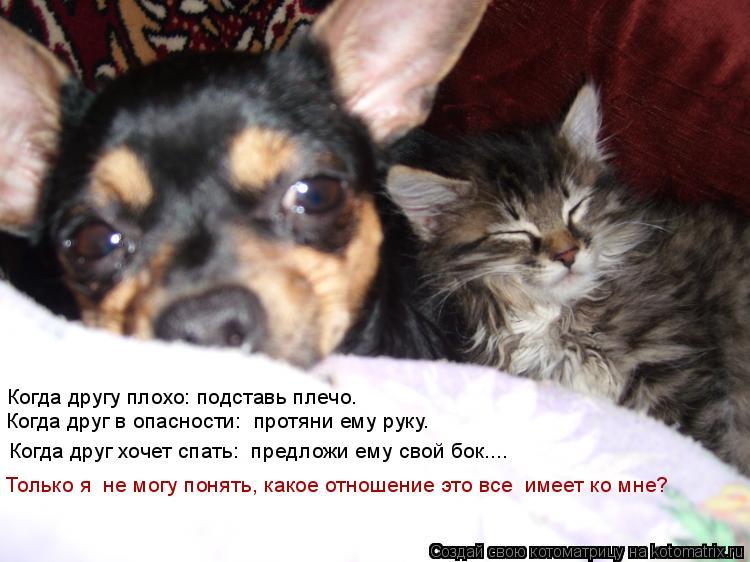 Котоматрица: Когда другу плохо: подставь плечо.  Когда друг в опасности:  протяни ему руку. Когда друг хочет спать:  предложи ему свой бок…... Только я  не м