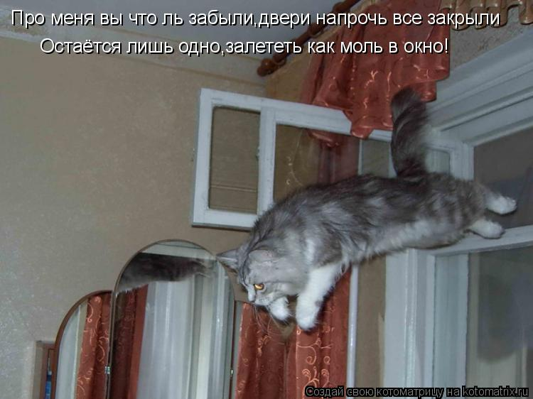 Котоматрица: Остаётся лишь одно,залететь как моль в окно! Про меня вы что ль забыли,двери напрочь все закрыли