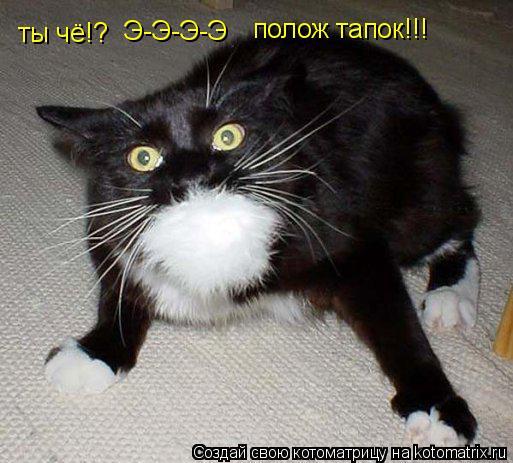 Котоматрица: ты чё!? Э-Э-Э-Э полож тапок!!!