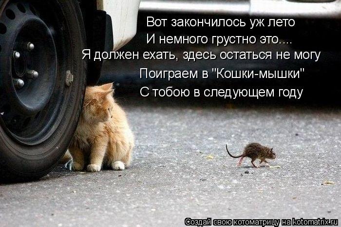 """Котоматрица: Вот закончилось уж лето И немного грустно это.... Я должен ехать, здесь остаться не могу Поиграем в """"Кошки-мышки"""" С тобою в следующем году"""