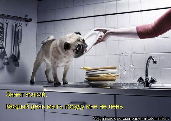 Котоматрица: Знает всякий: Каждый день мыть посуду мне не лень