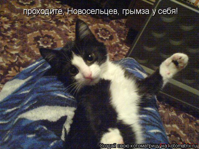 Котоматрица: проходите, Новосельцев, грымза у себя!