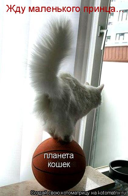 Котоматрица: планета кошек Жду маленького принца...