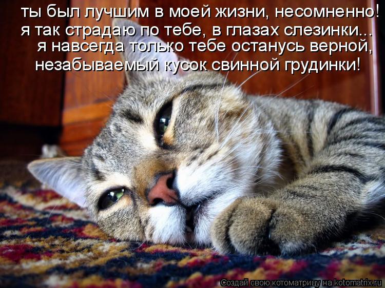 Котоматрица: ты был лучшим в моей жизни, несомненно! я навсегда только тебе останусь верной, я так страдаю по тебе, в глазах слезинки... незабываемый кусок