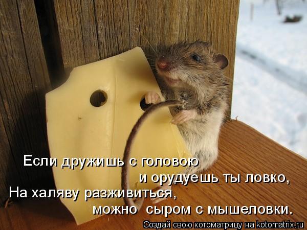 Котоматрица: Если дружишь с головою и орудуешь ты ловко, На халяву разживиться, можно  сыром с мышеловки.
