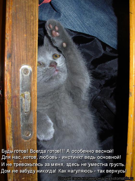 Котоматрица: Для нас, котов, любовь - инстинкт ведь основной! Будь готов! Всегда готов!!! А особенно весной! И не тревожьтесь за меня, здесь не уместна груст