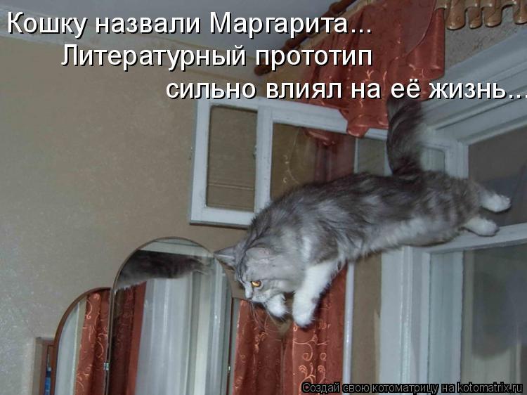 Котоматрица: Кошку назвали Маргарита...  Литературный прототип  сильно влиял на её жизнь...
