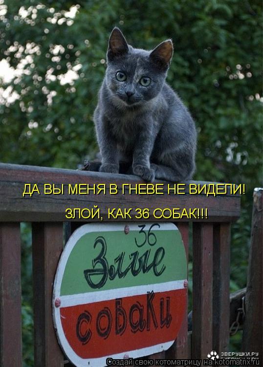 ДА ВЫ  МЕНЯ В ГНЕВЕ НЕ ВИДЕЛИ!ЗЛОЙ, КАК 36 СОБАК!!!