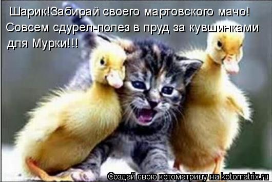 Шарик!Забирай своегомартовского мачо! Совсем сдурел-полез в прудза  кувшинками для Мурки!!!