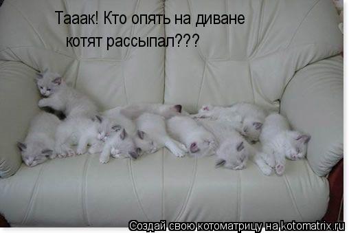 Котоматрица: Тааак! Кто опять на диване  котят рассыпал???