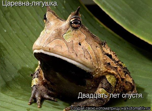 Котоматрица: Царевна-лягушка.  Двадцать лет спустя.