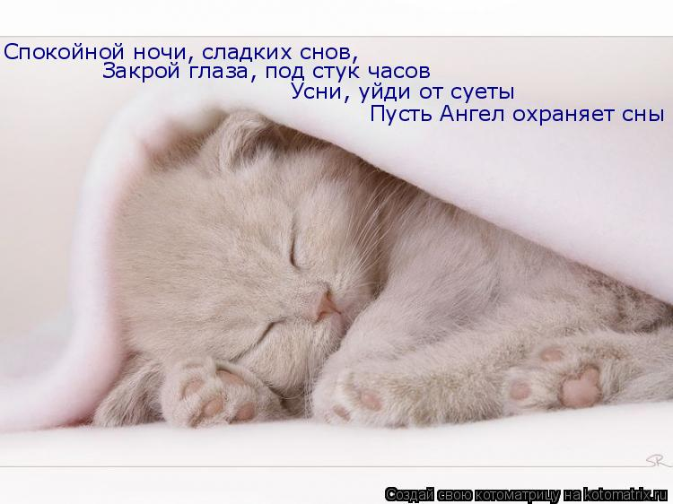 """Котоматрица: Подарил мне друг Вовка:  """"Вермокса """" упаковку,  """"Декариса """" пачку, кошку и собачку."""